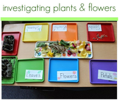 Investi- gating Plants and Flowers