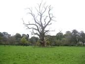 Witch tree lane
