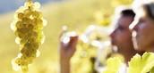 Vino je večan dokaz da nas Bog voli i da želi da nas vidi srećne