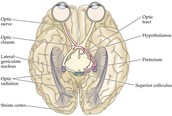 Optical Nerves