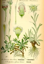 Флора в ботанике