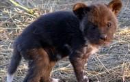 Baby Wild Dog