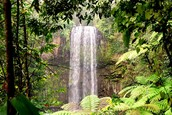 Tropisregenwoud klimaat