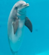 Cybernetic Dolphins