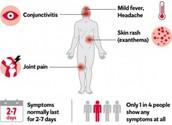 Zika Symptoms