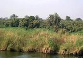 farmland along the Nile