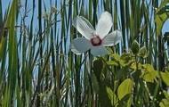 brackish water plant