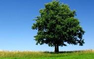 """tree"",""utterly"""