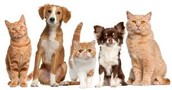 Animal Welfare Interest Meeting - Wednesday, February 3rd at 8:00 PM