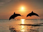 Dolphins Jumping while the sun goes down