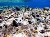 These are polluted and dead coral reefs.