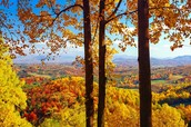 Fall In Love With Charlottesville