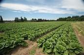Nos méthodes d'agriculture