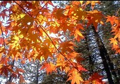 septiembre, octubre, and noviembre: el otoño