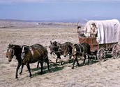 Wagon Trains