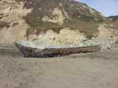Barnacle Coated Boat- Possible Japanese Tsunami Debris- Washed up on GGNRA Shores
