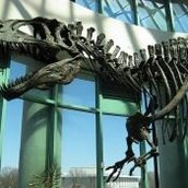 Oklahoma Fossil