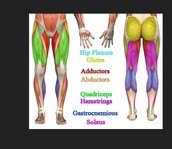 The Muscles that you need to work to get a fit booty