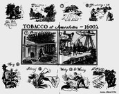 Tobacco in the 1600s