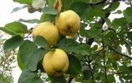 Más frutos y hojas