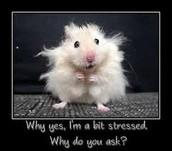 I'm a bit stressed