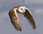 Do they fly silently?-¿Es que vuelan en silencio?