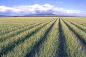FARMING PLAINS