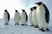 Different penguins