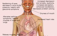 The  discription of the body & Long/Short term effects