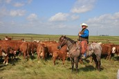 ranch manager