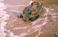 Nets Endanger Creatures