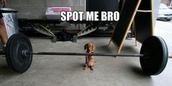 When it comes to fitness and nutrition, in the beginning we may feel like this little guy...