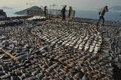 What's shark finning?
