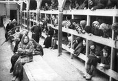 Auschwitz Sleeping