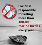 Effects of plastic pollution on sea turtles