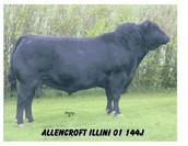 Allencroft Illini  01 144J