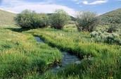 How the Grasslands are Special