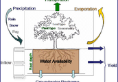 Tropical Forest and the Water Cycle