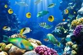 """""""Загрязнение подводного мира"""""""