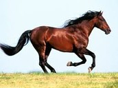 In riding a horse, you borrow a true taste of freedom