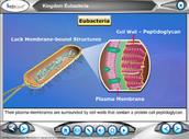 Edusmart Biology