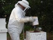 Meet the Beekeeper- Brad Baxter