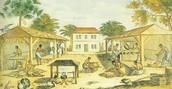 African Slaves in Virginia