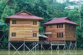 Tropical Rainforest Borneo's Animals