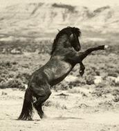 National Mustang Association