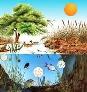 ¿Por que esta formado el biotopo?