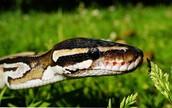 Animal Encounters: Reptile Lifestyle