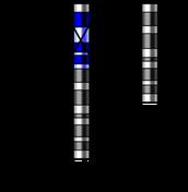 9th chromosome