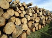 Wood For Fuel