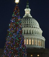 The Capitol Christmas Tree